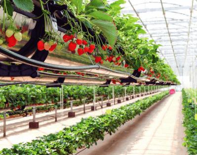 De Vettori - Agroindustrial